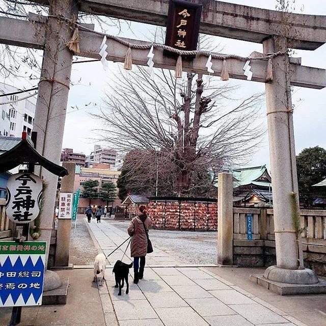 "REA on Instagram: ""からの~#今戸神社 #縁結び #1月12日"" (797951)"