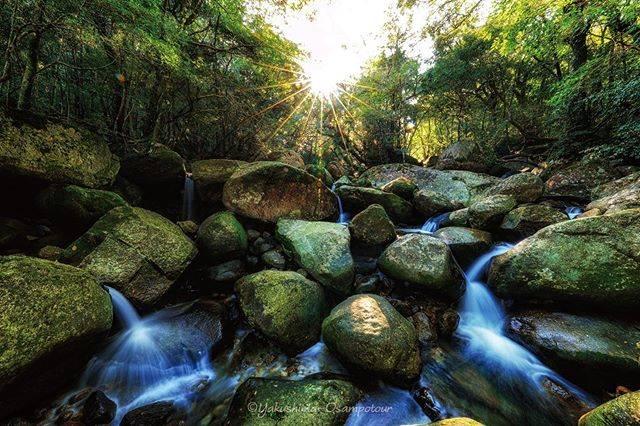 """屋久島お散歩ツアー on Instagram: """"苔と水の世界♪  #屋久島 #苔 #沢 #風景写真 #風景 #景色 #自然 #緑 #水 #日本 #島 #絶景 #綺麗 #森 #山 #yakushima #landscape #nature #forest #mountain #moss #river #view #light…"""" (798085)"""