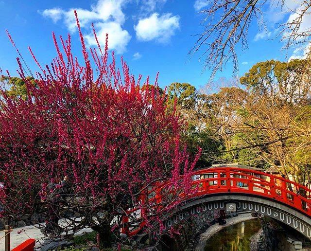 "®️&©️ on Instagram: ""2020.02.23. 青空と 夕陽と梅と 賀茂御祖 〠下鴨神社 #kyoto #kyotogram  #plum #shrine #art_of_japan_  #retrip_nippon  #best_photo_japan  #japan_daytime_view…"" (805940)"