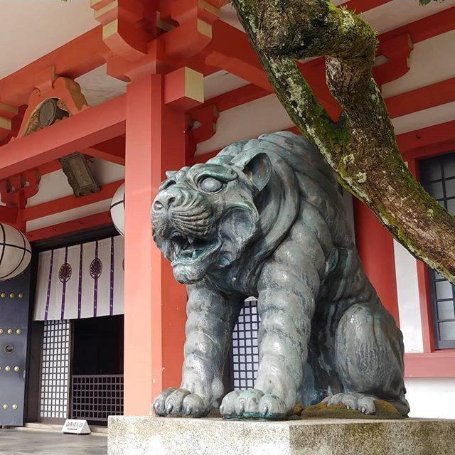 """西縁ゆかり on Instagram: """"鞍馬寺の狛犬。造形がやたらリアル虎ぽい。「じ、自分に聞かれても困るっス!」 的な表情がとても良す。#京都 #お寺 #狛犬 #鞍馬寺 #kyoto #japan #temple #kuramadera"""" (806717)"""