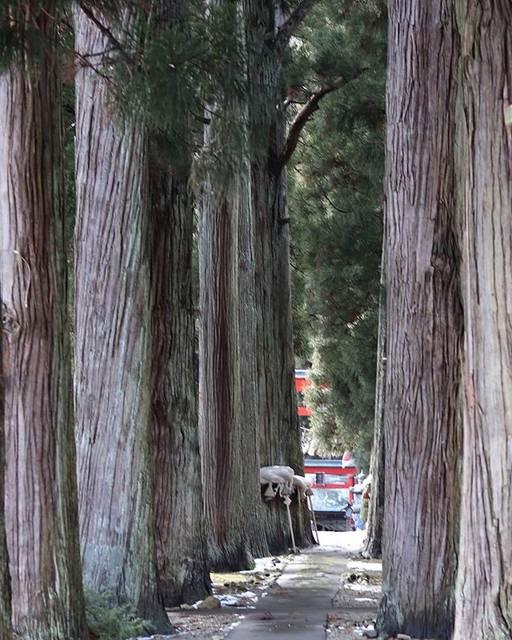 "quon_358 on Instagram: ""神秘的な雰囲気を醸し出す杉並木、とても心が晴れますねぇ! 秋田県大仙市に鎮座して折ります唐松神社です!#秋田県#大仙市#唐松神社#唐松神社の杉並木#神秘的な場所#安産の神#神社が好き#神社好きな人と繋がりたい#カメラが好きな人と繋がりたい#パワースポット"" (807276)"