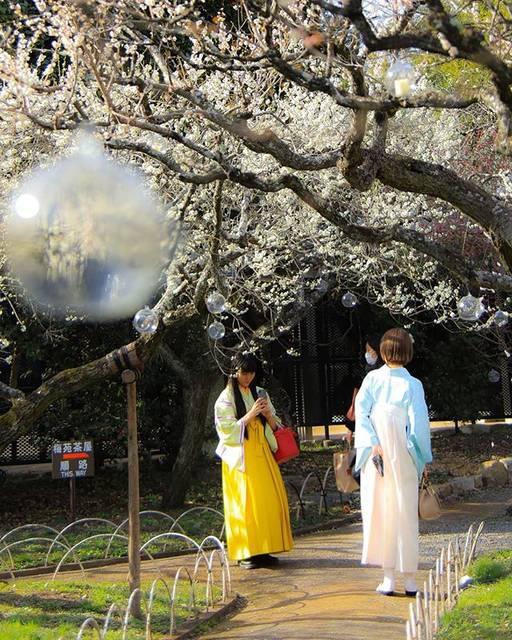 "Haru on Instagram: ""#photography #photo_japan_now #tokyocameraclub #instagood #artwork #北野天満宮 #春が来た #着物"" (807369)"