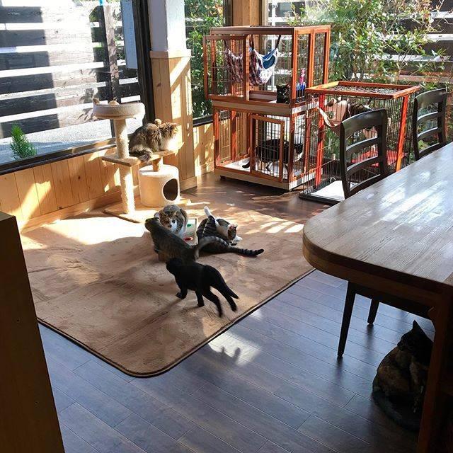 """猫カフェうたたね on Instagram: """"床の張替え完了しました。2日間せまいバックヤードに閉じ込められていた猫たち元気いっぱいです🐈遊びにきてくださいねー❤️週末はキレイになった店内でよいご縁お待ちしています。#宮崎#猫カフェ#保護猫カフェ"""" (808821)"""