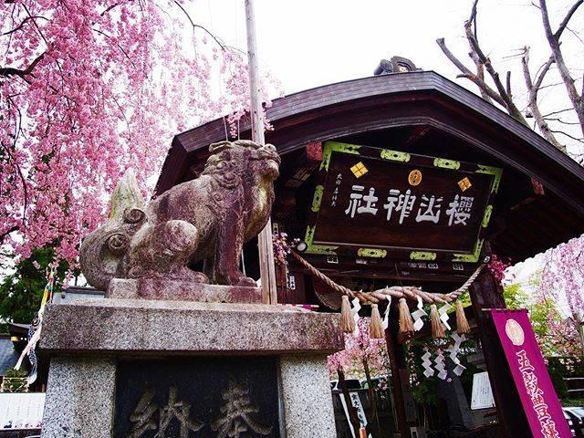 """エンゾ on Instagram: """"#instagood #instalike #instapic #travel #travelphotography #ig_japan #japan #follow4followback #f4f #explorejapan #盛岡 #桜山神社 #神社 #神社巡り…"""" (808900)"""