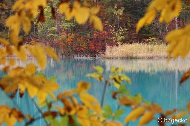 """@b7gecko on Instagram: """"🔹🔹ⓑ⑦ⓖⓔⓒⓚⓞ🔹🔹⠀ ・⠀ 〜 深泥沼の紅葉 〜 ・⠀ 久しぶりに五色沼湖沼群を歩きました ・⠀ ・⠀ -----------------------------⠀ 撮影地:福島 撮影日:2019.10.21 -----------------------------⠀…"""" (809567)"""