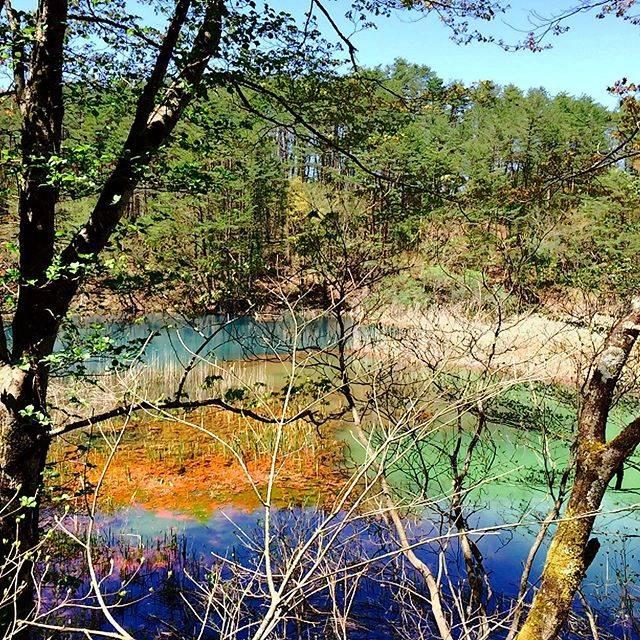 """yoshihiro sugimoto on Instagram: """"🇯🇵福島県、裏磐梯の五色沼。 本当に見る角度によって、様々な色に変わる水面を楽しめます。  こちらは、いくつかある沼の中の深泥沼(みどろぬま)です。 沼底の成分や流入する水、藻などの影響で色が変わるそうですよ。…"""" (809569)"""