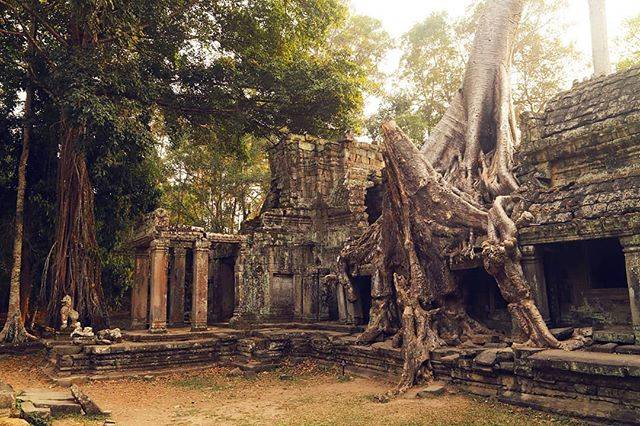 """STWorld Cambodia on Instagram: """"プリアカンは、アンコール王朝最栄を極めた、ジャヤバルマン7世によって12世紀ごろ建立されました。遺跡に力強く根を張るガジュマルは東門付近に位置しています。見どころはこれだけでなく、ギリシャ遺跡風の造りや、「踊る13人のアプサラ」などの保存状態のいいレリーフなど盛りだくさんです。…"""" (809986)"""
