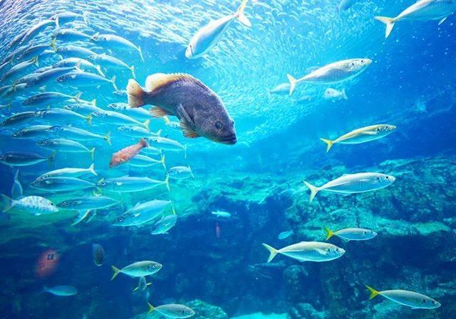 "Yuco on Instagram: ""長崎旅行 備忘録9  #九十九島パールシーリゾート #水族館 #大水槽 #長崎 #海きらら #aquarium #fish #blue #beautiful #nagasaki #travel #sony #sonyphotography #sonyalpha…"" (810180)"
