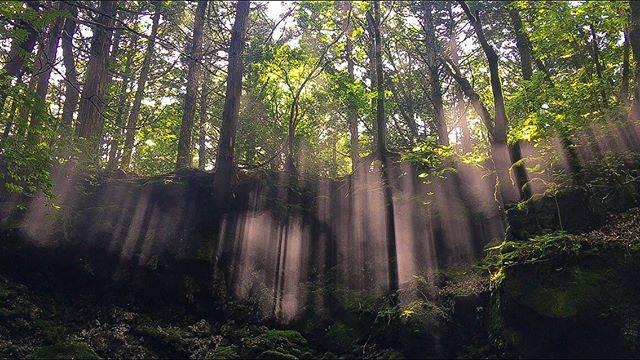 """@ma.sa_ten on Instagram: """"光のカーテン  洞窟から見上げたら  冷たい空気と暖かい空気の間に層が出来てゆらゆら上下してとてもきれい!  富士山での神秘的な場所  19/08/03 青木ヶ原樹海  #私の山フォト  #hyakkei_me  #hyakkeime  #溶岩洞窟  #青木ヶ原樹海…"""" (810396)"""