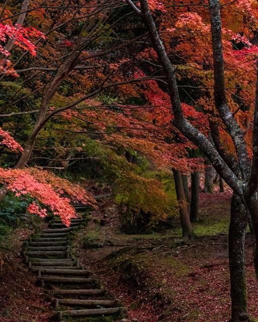 "Kazuhiko Sasaki on Instagram: ""「まだ秋を感じる場所」 🍁 🍁 🍁 🍁 #もみじ #鏡山公園 #紅葉 #西条 #setouchigram92 #wu_japan #東京カメラ部 #tokyocameraclub #lovers_nippon #art_of_japan_ #wp_japan…"" (813244)"