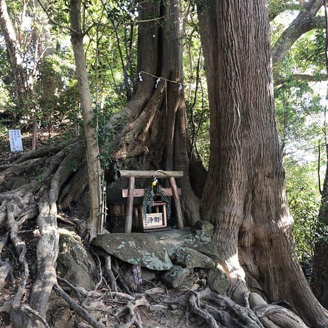 """みき on Instagram: """"事任八幡宮の むすびの神 です  石をだく抱くようにカヤとアラガシが生えているそうです  #静岡 #掛川 #静岡観光 #事任八幡宮 #むすびの神 #神社 #風景 #景色 #日帰り旅行 #おでかけ #ドライブ #こころから #shizuoka #kakegawa #shrine…"""" (818328)"""