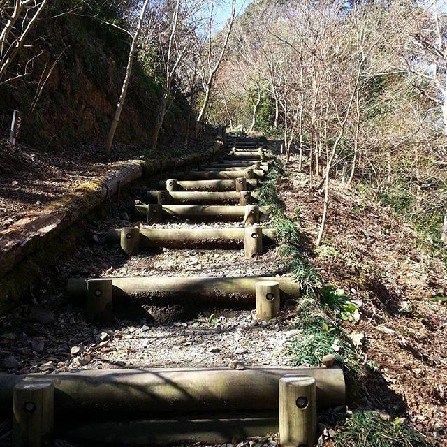 """카호리 on Instagram: """"#春 #春一番 #龍神社 #こととびの里#階段 #山道 #日本 #봄 #봄바람 #신사 #계단 #산길 #일본 #japan #spring #shrine #stairs #mountainpath"""" (818521)"""