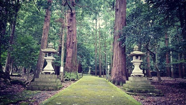 "Takashi  Yamada on Instagram: ""福井 若狭彦神社 参道前写真 若狭姫神社の上社です。杉の木2本が鳥居に見立てるそうです。非常に何かのパワーの感じる参道です。714年に創建。...#若狭彦神社 #参道 #杉 #小浜市 #パワースポット神社 #神社 #神社仏閣 #写真好きな人と繋がりたい"" (825621)"