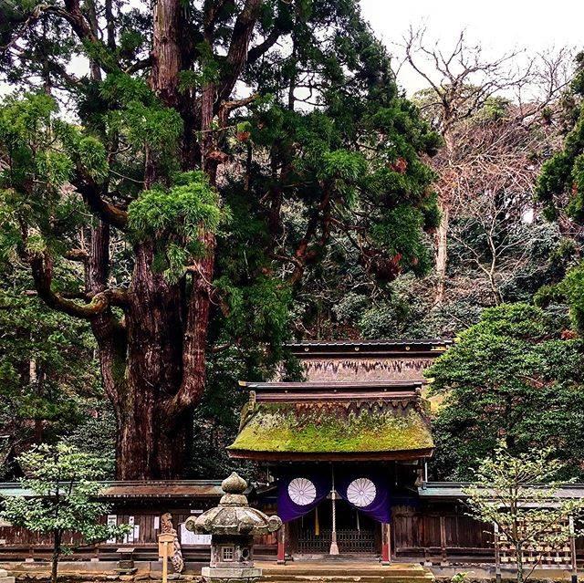 """山田ごう on Instagram: """"圧倒的な千年杉  ひっそりとした境内に千年杉が圧倒的な存在感を示す小浜市鎮座の若狭姫神社。  創建は1300年前と伝わる。 境内は観光地化されておらず千年来の風情をを肌で感じることができます。  福井で必ず巡りたいお社さまの一社です。  #福井の神社のある風景  #若狭姫神社…"""" (825627)"""