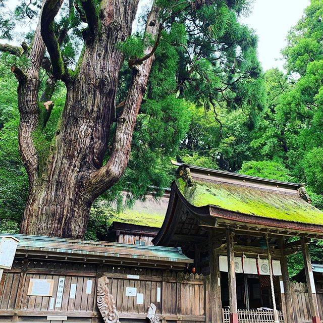 "ASUKA占いhealer🇯🇵psychic on Instagram: ""若狭彦神社(上社)には若狭彦神、 若狭姫神社(下社)には若狭姫神が祀られています。  若狭彦神社は強力な浄化エネルギーで満ちているので、 綺麗に浄化されてから若狭姫神社へ参拝がオススメ。 参り方は諸説ありますが。  若狭姫神社には千年杉があります。 圧巻🙄💦…"" (825628)"