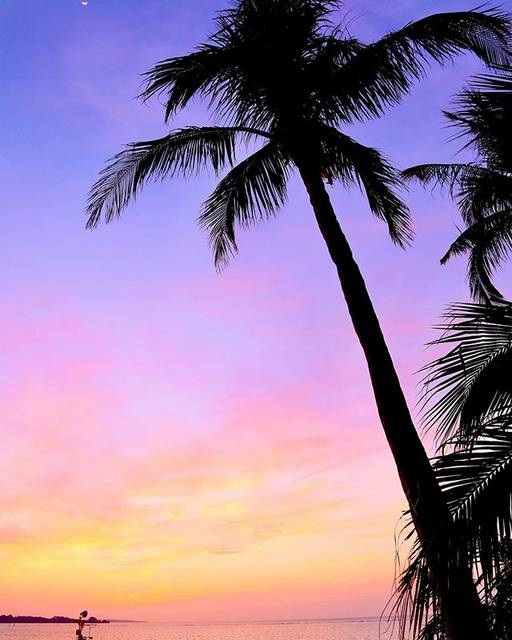 """@seapalmsdiver on Instagram: """"bye bye OKINAWA🏝  #沖縄 #恩納村 #ムーンビーチ #パームツリー  #マジックアワー #沖縄好きな人と繋がりたい #海好きな人と繋がりたい #写真好きな人と繋がりたい #sea #sealovers #world_bestsky #sky…"""" (826162)"""