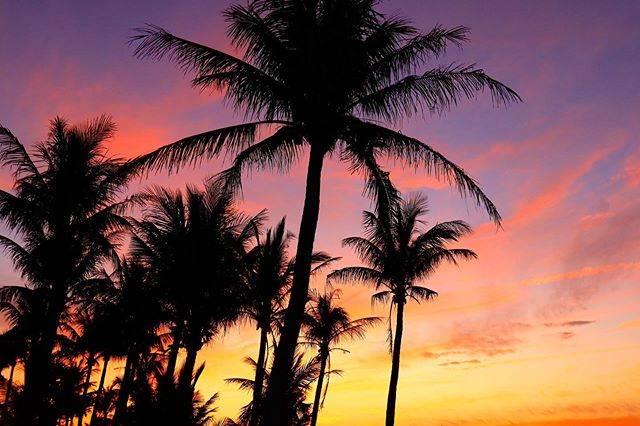 "@seapalmsdiver on Instagram: ""クラスター発生しました。 どうなる?どうする? 離島に逃亡するか!? #沖縄 #ムーンビーチ #サンセット  #マジックアワー #沖縄好きな人と繋がりたい #写真好きな人と繋がりたい #sea #sealovers #world_bestsky #sky #palmtrees…"" (826224)"