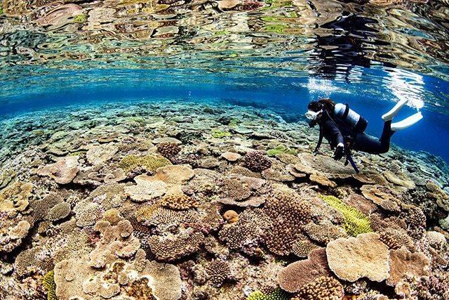 """Mai🥥🌿 on Instagram: """"*・ベタ凪のときの珊瑚リフレクション🎨鏡に写ってるみたい...・職場にダイビングのイントラしてた方が入社してきて、今日の北部までの車内は永遠に海の話だった🐠・📷 @dive_journey・・*"""" (827404)"""
