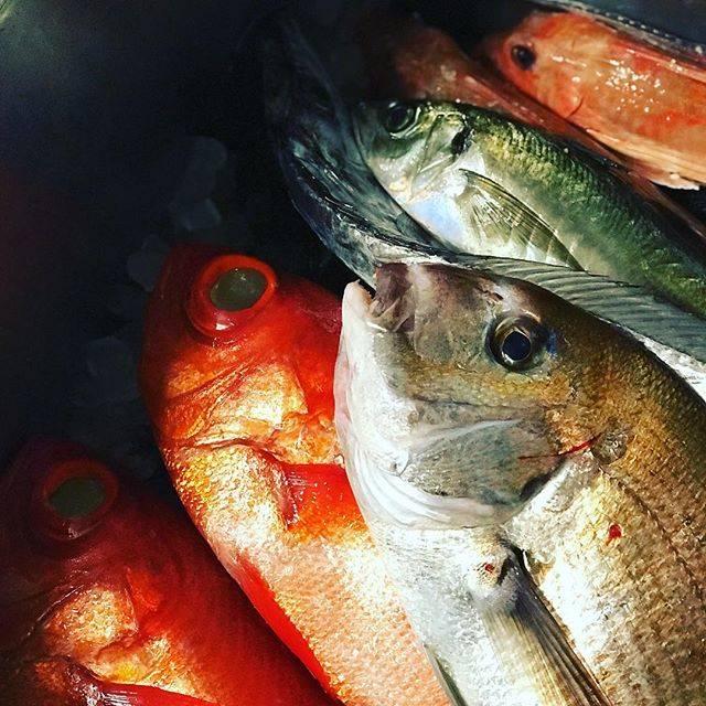 """鮨 千陽 on Instagram: """"本日も良い魚入荷しました! 昆布締めや酢締めにします。  スタッフ一同心よりお待ちしております。 #鮨千陽 #千陽 #大阪福島 #江戸前寿司 #江戸前 #飲食人大学 #ミシュラン #ビブグルマン #chiharu #sushi #michelin #bibuguruman…"""" (830941)"""