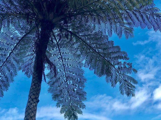 """ようこ on Instagram: """"ヒカゲヘゴ ・ ・ 素敵な大きなシダの木 この木の下で  美味しいマンゴージュースを飲む 最高です❣️ ・ ・ #石垣島 #ヒカゲヘゴ #川平ファーム #青空  #見上げる  #写真好きな人と繋がりたい  #ファインダー越しの私の世界  #誰かに見せたい空  #風景 #プチ旅行…"""" (832324)"""