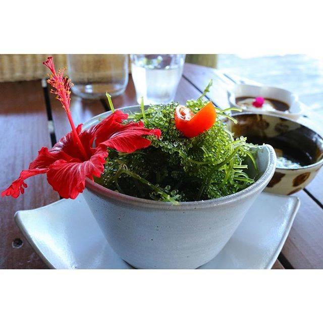 """yuri on Instagram: """"* 沖縄お昼ごはん♡ * 海ぶどうとアグーの丼仕立て 沖縄に戻りたい、、、笑 * テラス席でいただきました( ¨̮ ) * #沖縄 #okinawa #瀬底島  #海 #ひとり旅 #一人旅 #タビジョ  #fuucafe #海ぶどうとアグー  #昼ごはん #美味 #lunch…"""" (833993)"""