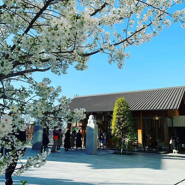 """寅夫 on Instagram: """"東京で1番美しい神社⛩ 外出自粛要請前に行った#赤城神社 🌸 #隈研吾 が手掛けた何とも近代的な美しさのある独特な世界観😲 快晴&満開の桜&外出自粛前で本当に良いタイミングで行けました😳 境内の中にマンションがあるのもビックリ🏢 #東京観光 #神社 #神社巡り #パワースポット…"""" (834075)"""