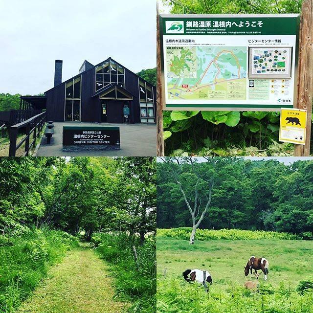 """ZEPPIN on Instagram: """"なんとなく温根内のビジターセンターへ…遊歩道は…😳子熊の目撃あったのね🧸ま、気にせずいざ出発👟なんか違う世界に繋がりそうな小径…ラスト、鹿と目が合い見つめあってしまった🦌 キュンと鳴いて去って行きました😊 キビタキ見た🐧😃 #温根内 #熊 #鹿 #熊目撃…"""" (853300)"""