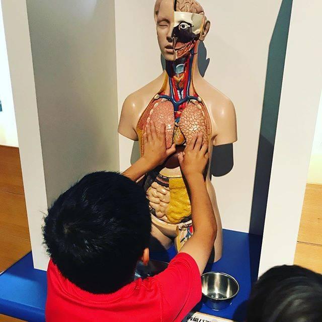 "dokokanojun on Instagram: ""内臓パズル。#旭川市科学館サイパル #科学館#サイパル #内臓パズル"" (865709)"