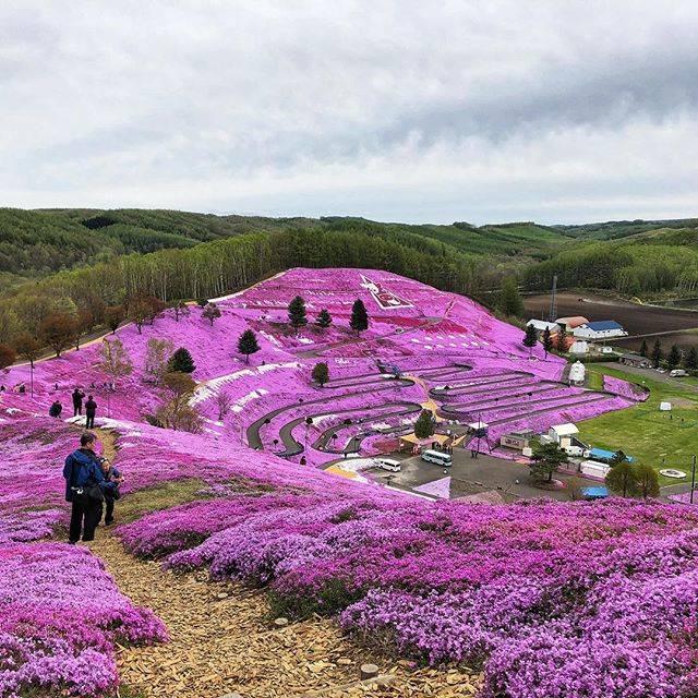 "Ray on Instagram: ""🇯🇵 Shibazakura hillside in Hokkaido, Japan🇯🇵..#abashiri #hokkaido #japan #mountmokoto#shibazakura"" (866097)"