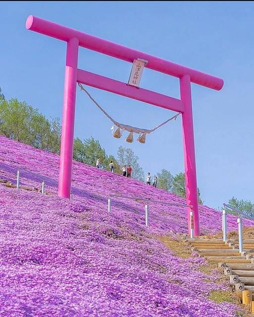 "🌹 on Instagram: ""🌸🌸✨Jappo💘🌸🌸 . . #parco #park #japan #japanphoto #japanese #jpop #flowers #flowerstagram #japantrip #japanflower #travel #pink #pinkflowers…"" (866104)"