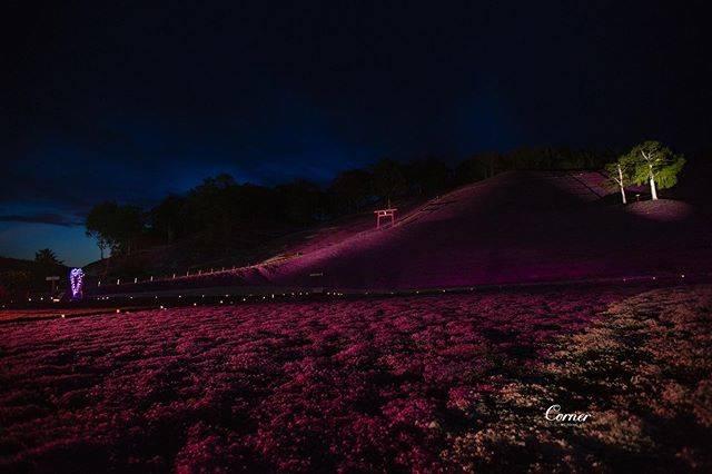 "Corner I Wedding Studio on Instagram: ""海外ウェディングドレス-北海道  今年は5月に北海道に着きました。山に桜が咲き、ピンクの桜がとても美しい😍  また、Zhiying Parkの32周年にあたり、地元の雑誌へのインタビューや、最高の場所での撮影を特別に手配してくれました。…"" (866145)"