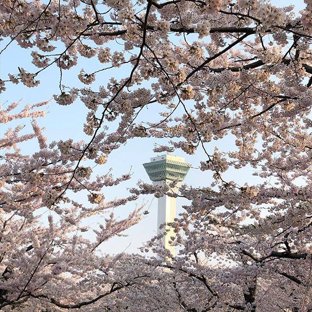 "ai_ai_/ on Instagram: ""#Hakodate #hakodate #hokkaido #japan #goryokakutower #goryokakupark #cherryblossom  #iphonephoto #sunnyday  #函館 #今日の散歩は夕方に #五稜郭公園 #五稜郭タワー…"" (869802)"
