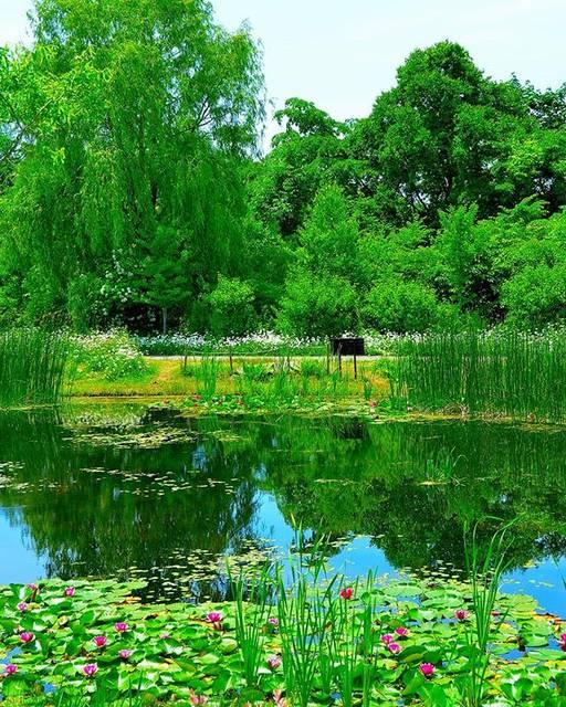 """@nonbillylife on Instagram: """"北海道ガーデン街道🎵 十勝ヒルズ🎵 睡蓮の池🎵 * #tokachihills #obihiro #hokkaido #hokkaidogarden #garden #flowerlovers #waterlily #pond #green #reflection…"""" (872492)"""