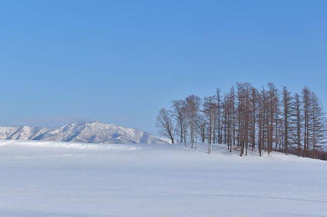 """とこ  Toko on Instagram: """"先週大雪が降り、春とは程遠い雪景色。  でも暖かくって、降った雪もどんどん溶けてくるから、もう少し、あと少し。  昨日はR-1グランプリで死ぬほど笑った。あたたかかたつむり。  今日も良い1日を。  お返事遅れています、ごめんなさい。  北海道 帯広市 2020/3/7…"""" (874055)"""