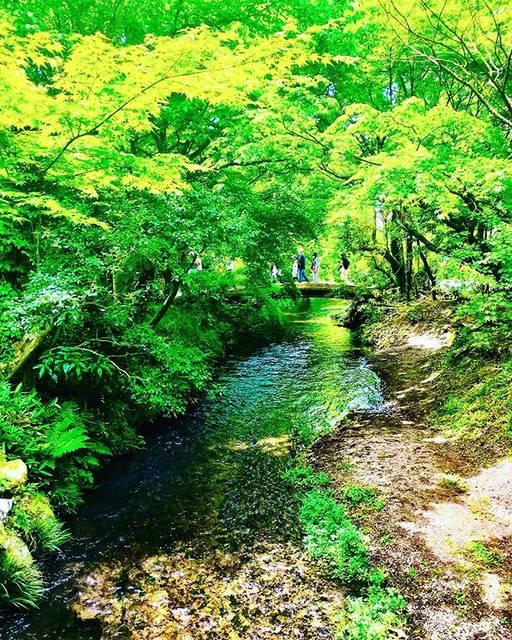 """上野ユリ/ YURI UENO 旅する陶芸作家✈︎起業家's Instagram photo: """"パワースポットとして有名な #金鱗湖 🌿🌿龍🐉が住んでいる 神話がある美しい湖✨☺️ だからか、歩くたびに、スーと 元気になれます🐉💓 . . . . #由布院 #由布院旅行 #ooitatrip #大分旅行 #yuhutrip #由布院観光 #大分観光 #kyushutrip…"""" (874394)"""