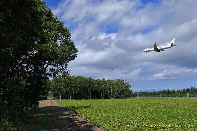 """ちょっきん on Instagram: """"この景色は今は??? やっぱり見に行ってみようかな😊  #とかち帯広空港 #飛行機写真  #飛行機好きな人と繋がりたい  #飛行機のある風景  #帯広空港 #obo #帯広 #十勝の風景 #十勝  #北海道飛行機部 #航空写真  #飛行機倶楽部 #JAL…"""" (878652)"""