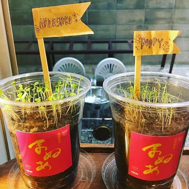 """SPK on Instagram: """"コーヒー豆カス肥料『マヌア』ご購入後、種を蒔いた方からも「芽が出ました!」と報告が🌱皆さんと一緒にこれから育てていくマヌア プロジェクト生育状態もぜひ共有してください🌱#マヌア"""" (882263)"""