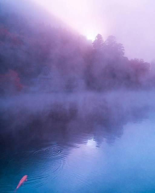 """HITOSHI on Instagram: """"金鱗湖の紅葉🍁 鯉が霧に遮られた 朝日に向かって😊💓 : : 朝投稿予定でしたが、 出来なかったので 久々の連投です。 #大分 #金鱗湖 #由布院 #カモ  #紅葉 #autumn #旅行 #travel  #instagram #japan #hellofrom…"""" (882625)"""