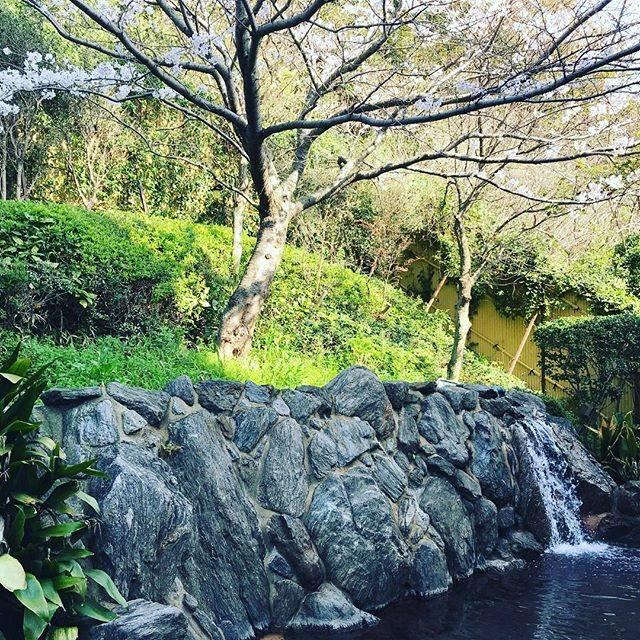 """Royal Hotel 宗像 on Instagram: """"#玄海さつき温泉 では #桜 が満開になりました‼︎夜は#ライトアップ され幻想的な景色をご覧いただけます温泉と桜を是非お楽しみくださいませ#玄海ロイヤルホテル #ロイヤルホテル宗像 #日帰り入浴 #写真好きな人と繋がりたい"""" (884173)"""