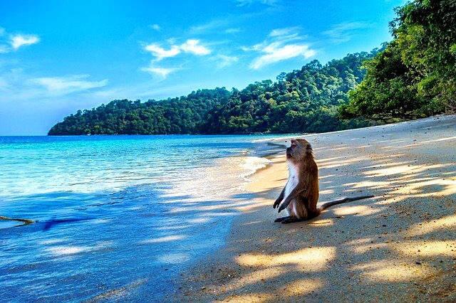 「モンキービーチ(Monkey Beach)」には可愛...