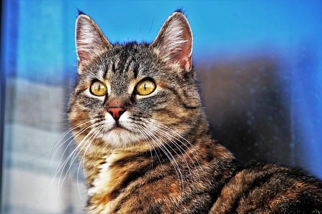 Animals Portrait Charming · Free photo on Pixabay (30691)