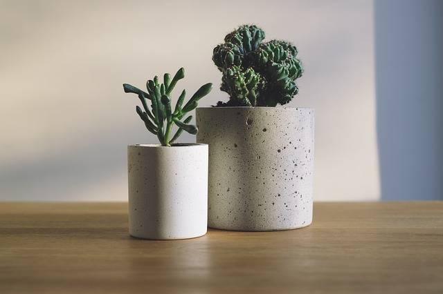 Cactus Green Plants · Free photo on Pixabay (33360)