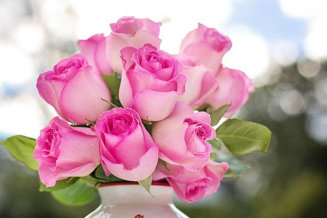 Pink Roses Flowers · Free photo on Pixabay (36293)