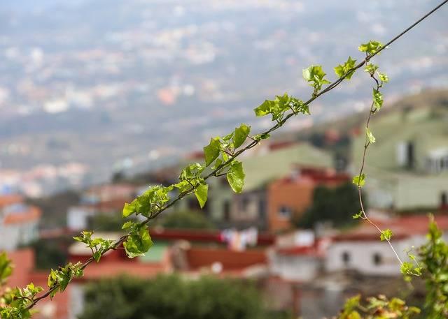 Ivy Entwine Plant · Free photo on Pixabay (38095)