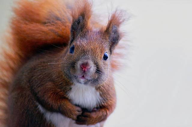 Squirrel Fur Cute · Free photo on Pixabay (48333)