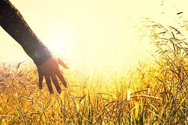Hands Grasses Sunset · Free photo on Pixabay (52540)