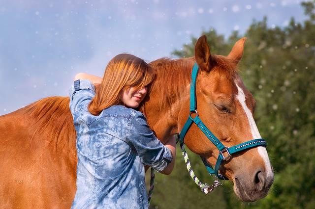 Mammal Cavalry Horse · Free photo on Pixabay (52908)