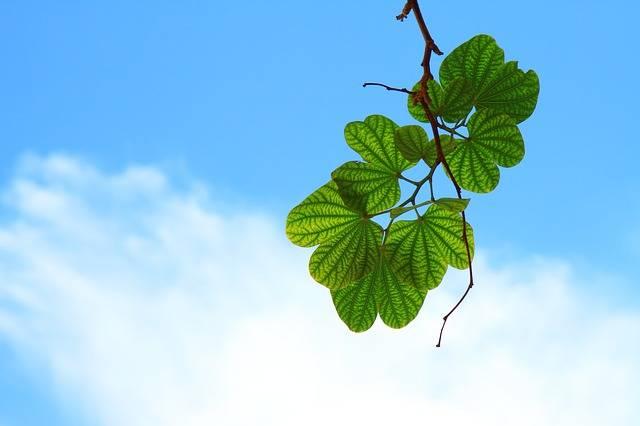 Leaves Sky Blue · Free photo on Pixabay (55123)