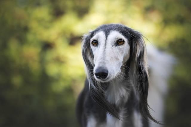 Animal Company Dog Animals · Free photo on Pixabay (57506)