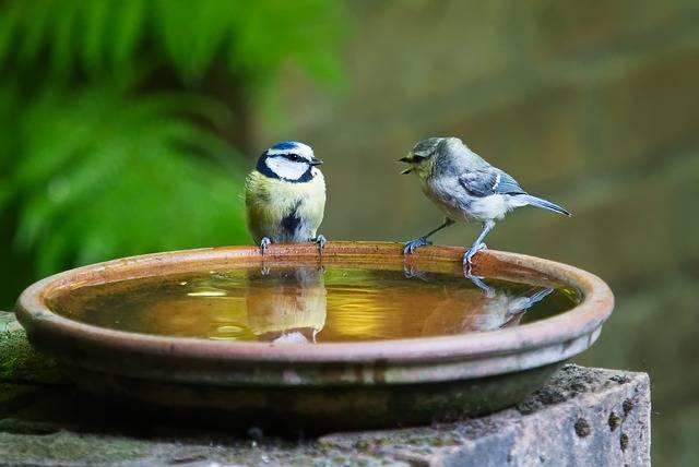 Conversation Talk Bird · Free photo on Pixabay (58972)